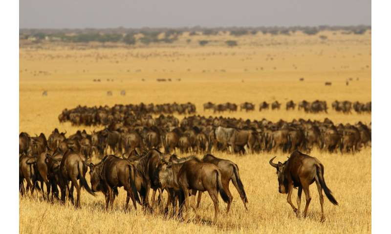 The Serengeti-Mara squeeze -- One of the world's most iconic ecosystems under pressure