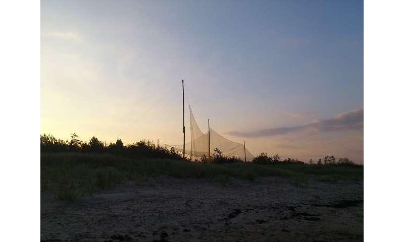 Migrating bats use the setting sun