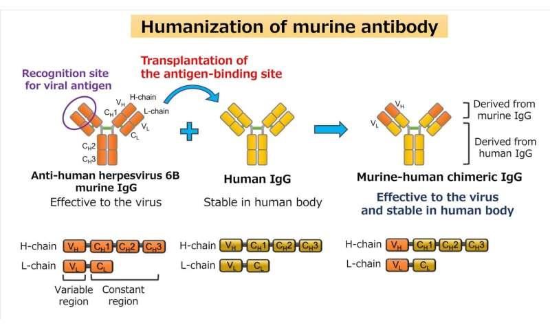 Murine Antikörper