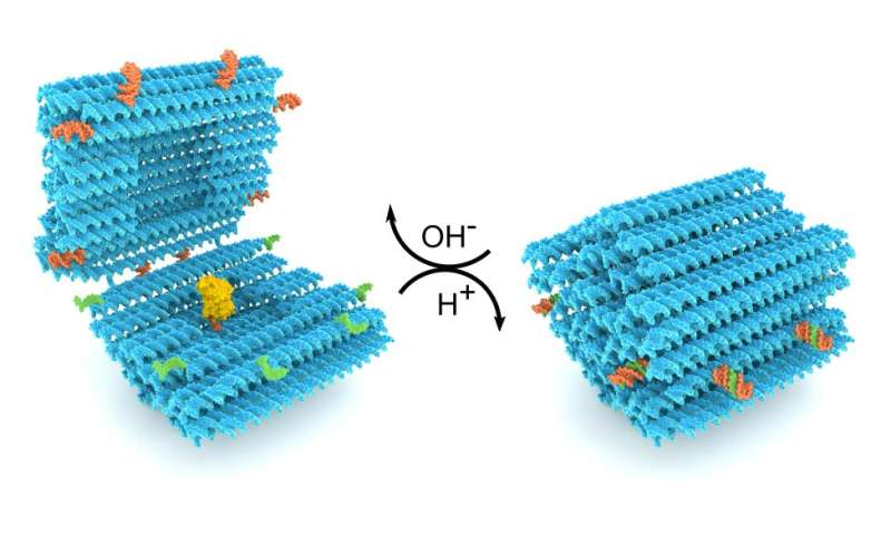 DNA folds into a smart nanocapsule for drug delivery