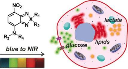 Small and tunable fluorophores for the imaging of metabolites in living cells