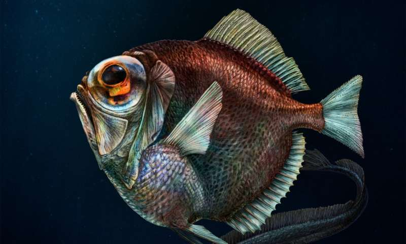 Remarkable fish see color in deep, dark water