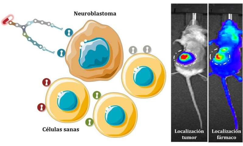 Synthetic molecules deliver drugs directly to neuroblastoma cells