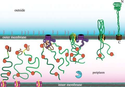 A novel antibiotic idea: Preventing bacterial stickiness