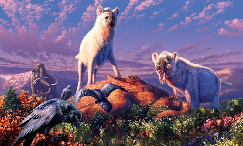 Fossil teeth reveal ancient hyenas in the Arctic