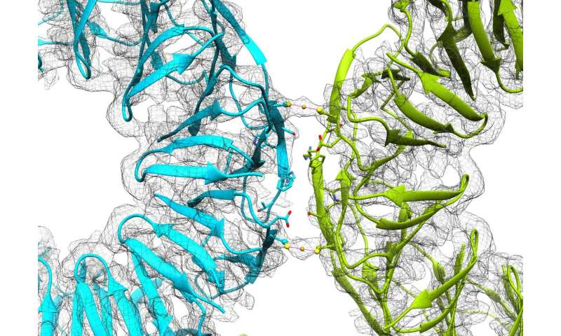 Gold adds the shine of reversible assembly to protein cages