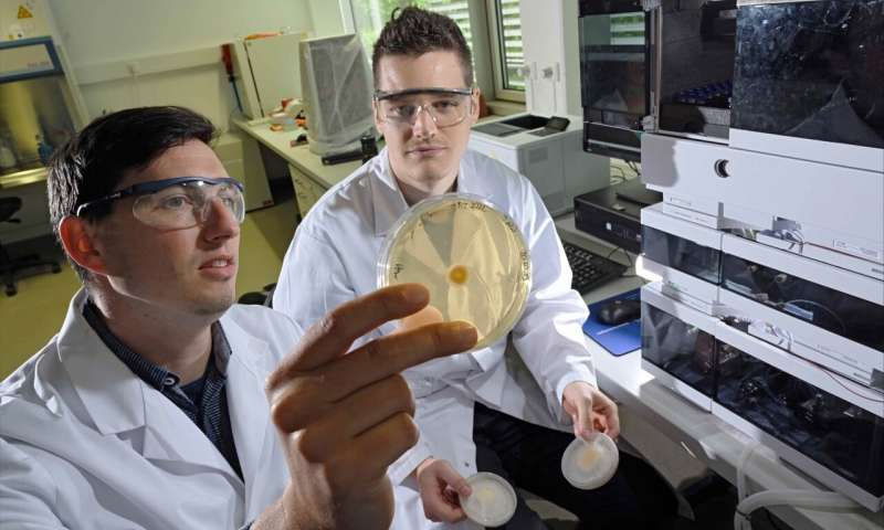 Fungus produces highly effective surfactant