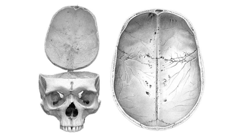 Studying the human brain through craniovascular traits