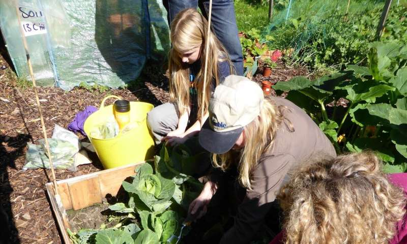 Allotment soil is safer than U.K. national guidelines suggest