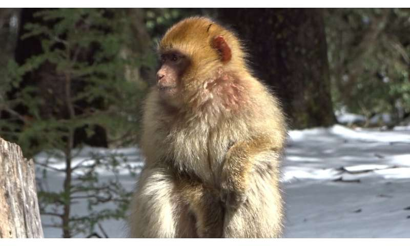 """Unprecedented display of concern and """"consolation"""" towards an unknown monkey offers hope for endangered species"""