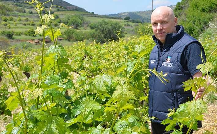 Researchers to investigate drought-tolerant vines
