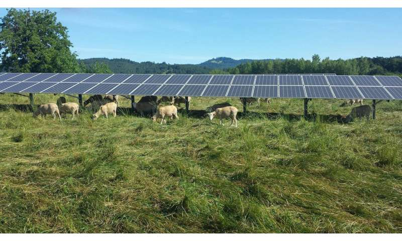 Installing solar panels on agricultural lands maximizes their efficiency, new study shows