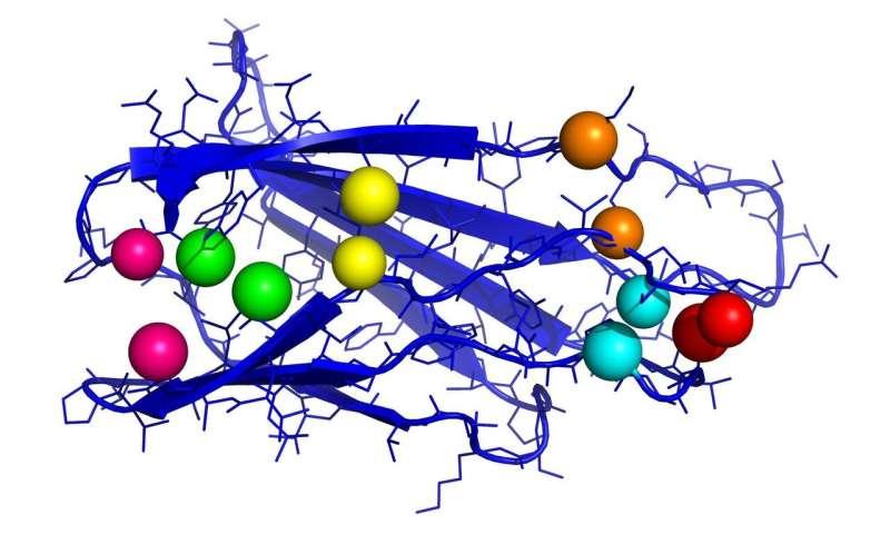 AI to predict protein structure