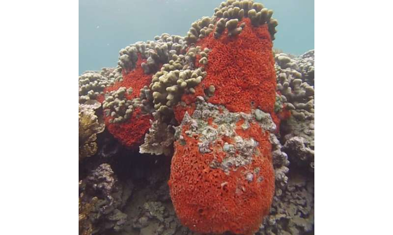 New study reveals unique dietary strategy of a tropical marine sponge