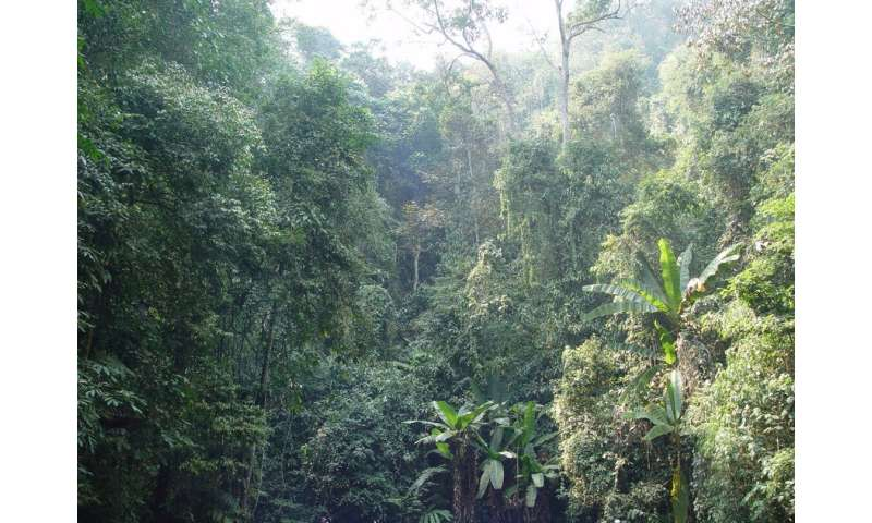 Scientists investigate climate and vegetation drivers of terrestrial carbon fluxes