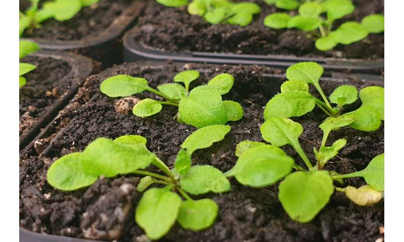 Breakthrough in fight against plant diseases