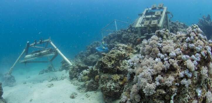 Understanding the growth of coral reefs