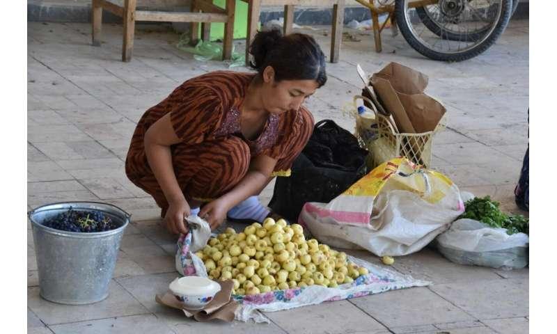 Explorando los orígenes de la manzana.