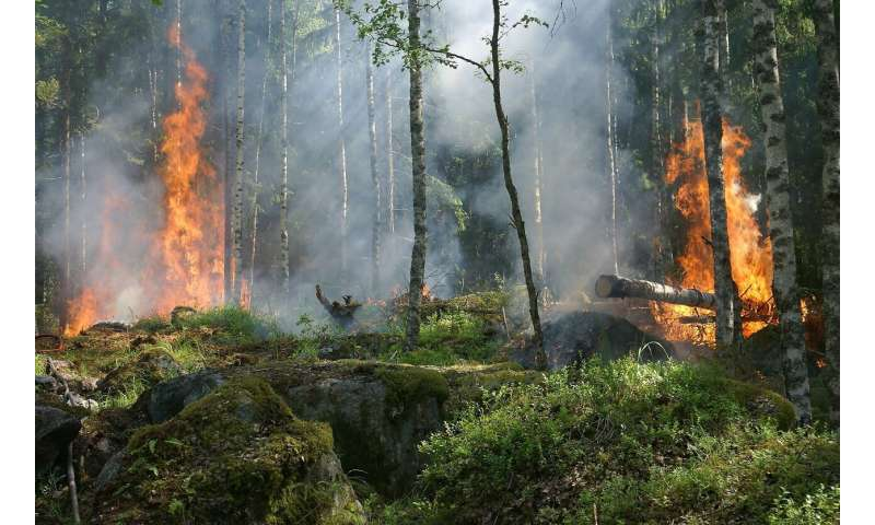 Sustainable land management key to reducing Amazon wildfires, study shows