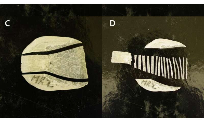 Researchers solve the riddle of a unique fish