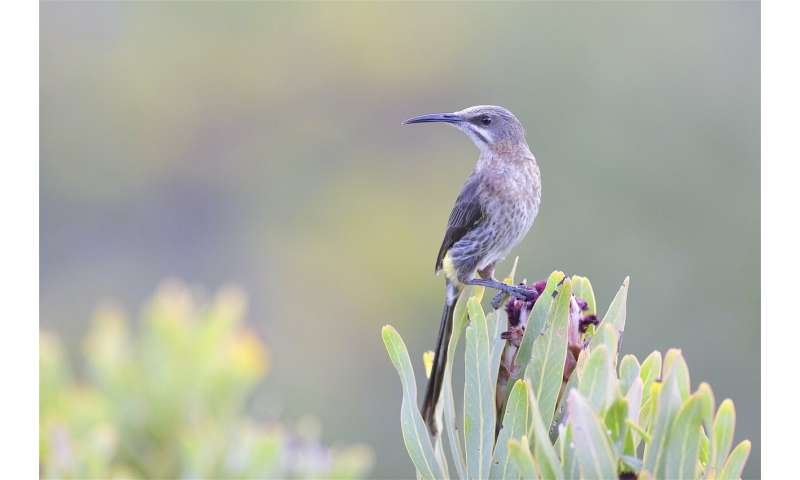 Scientists construct new family tree for perching birds