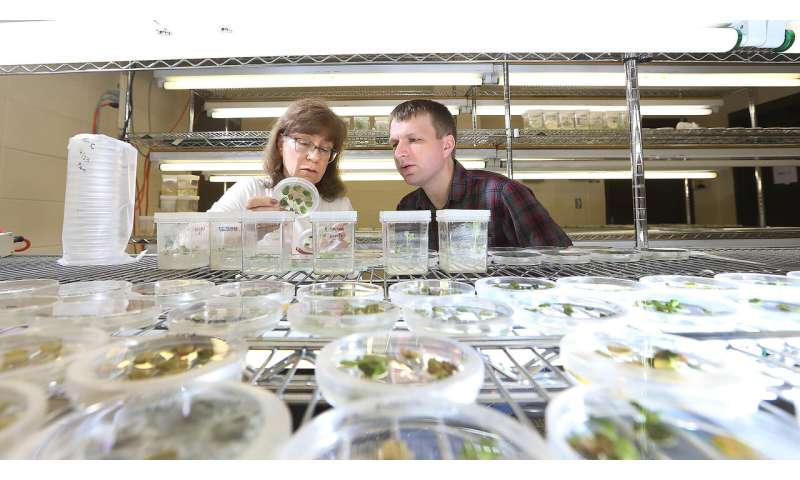 **Researchers discover new transportation route for plant volatile compounds
