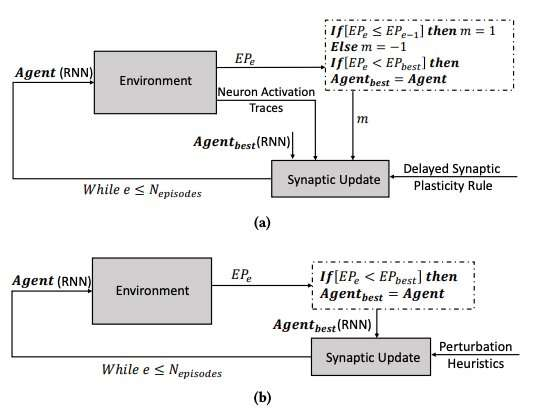 A bio-inspired approach to enhance learning in ANNs