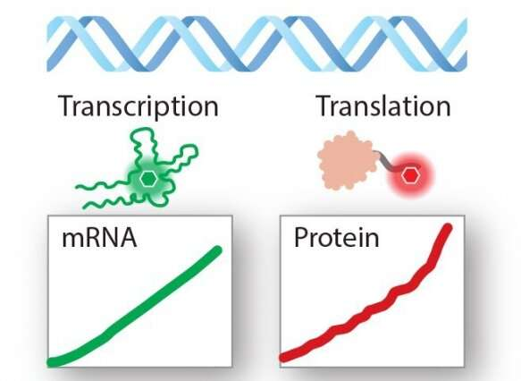 "A ""biomultimeter"" to measure RNA and protein production in real-time"