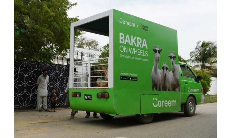 A Careem cab service delivers goats ahead of the Muslim festival Eid al-Adha, in Karachi, Pakistan in 2017