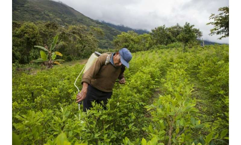 A coca grower sprays his crop outside Coroico, Bolivia where the increased use of pesticides is threatening the survival of bees