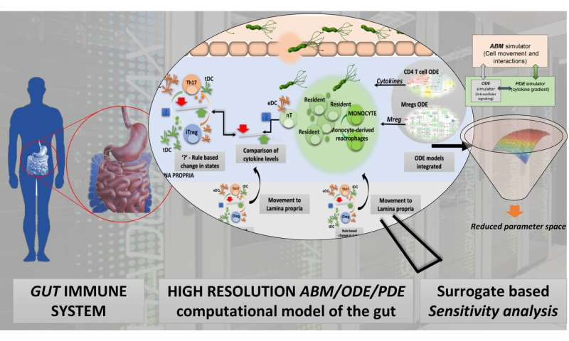 ++Advanced computational modeling of the gut for biodefense