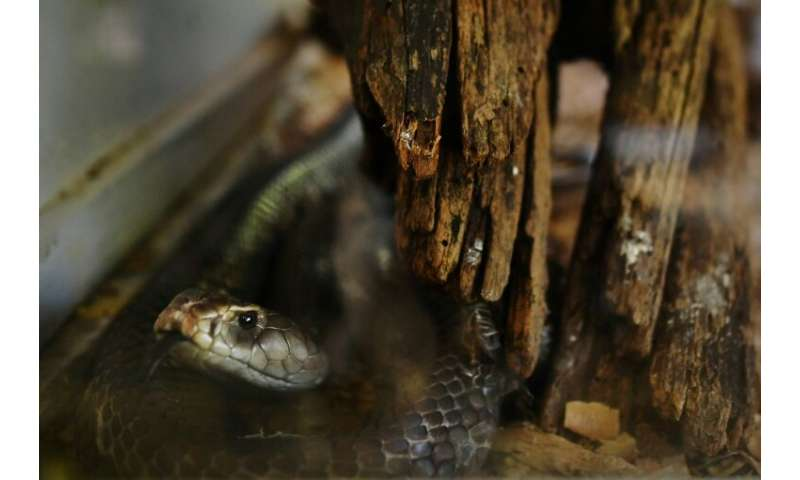 Africa alone sees about half a million snakebites that need treatment every year, according to the World Health Organization