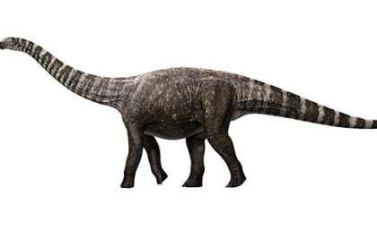 Un dinosaure à talons hauts?