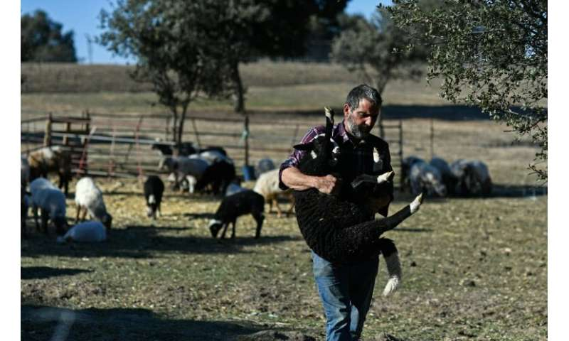 Alvaro Martin is  one of two shepherds who look after the flock full time