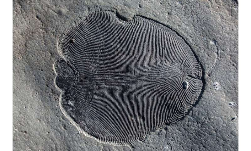 Scientists solve mystery shrouding oldest animal fossils