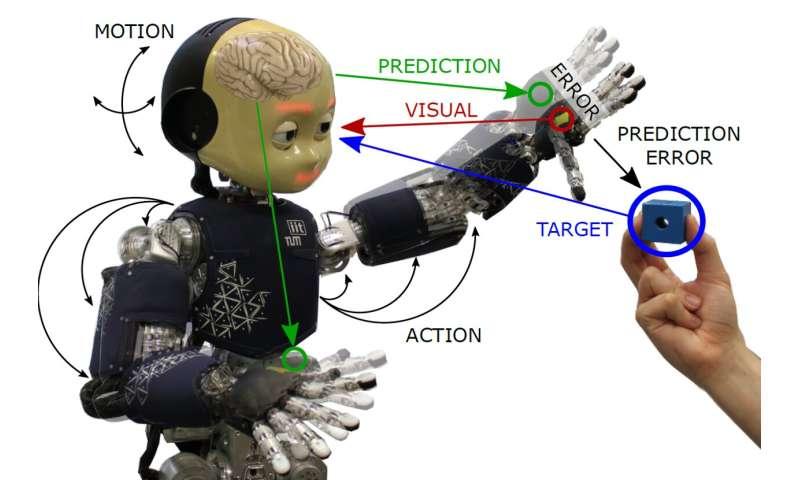Application de la perception du corps par inférence active à un robot humanoïde