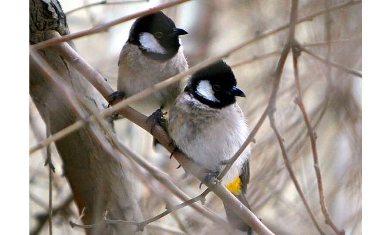 A report that shows that female birds prefer smarter males aligns with one of Charles Darwin's old theories, which held that mat