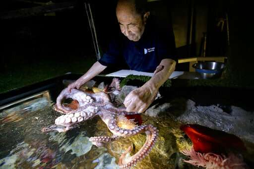 Armed with affection, octogenarian is an 'octopus whisperer'