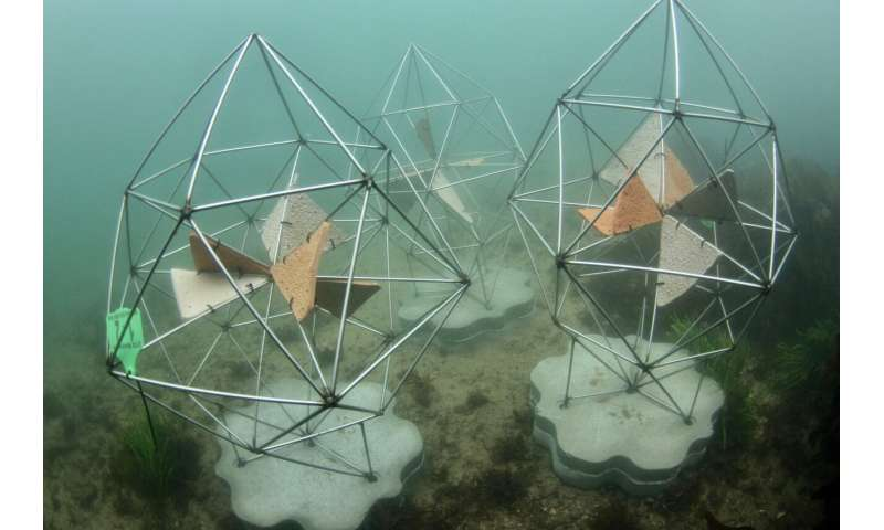 Artificial reef makes its debut at Sydney Opera House