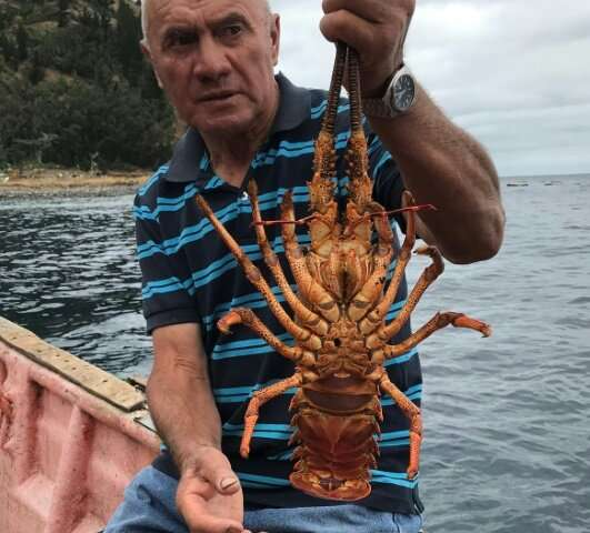 As far back as 1935, fishermen started introducing measures to preserve the islands' principal source of income, the lobster