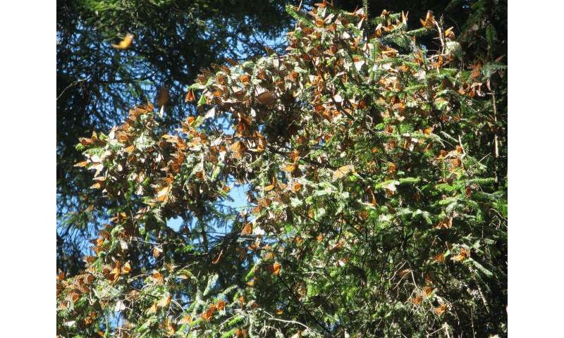 As monarchs migrate northward, experts ask Iowans to keep habitat in mind