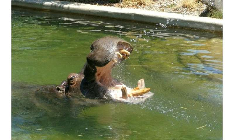 At Adelaide Zoo animals have been getting hosed down with cool water