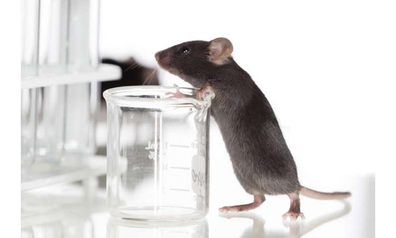 Australia's animal testing laws are a good start, but don't go far enough