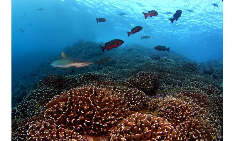 Bacteria surrounding coral reefs change in synchrony, even across great distance