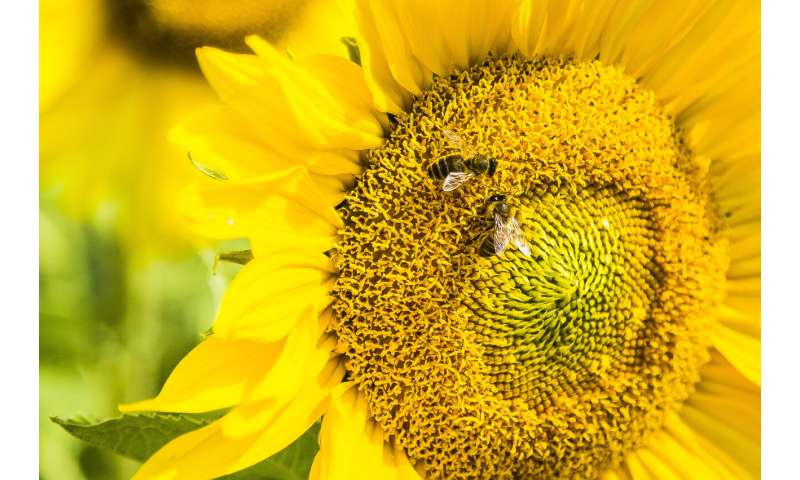 Bees can link symbols to numbers: Study