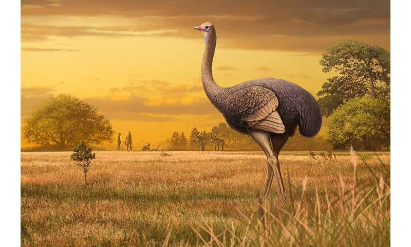 Big Birds: Giant birds weighing 1,000 pounds that were once in Europe.