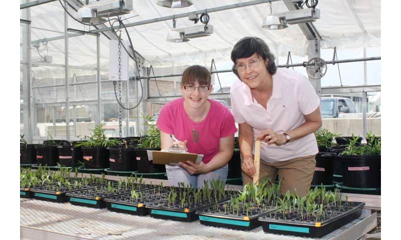 Biochar may boost carbon storage, but benefits to germination and growth appear scant
