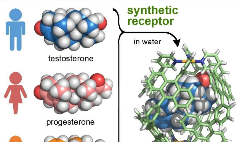 Artificial receptor distinguishes between male and female hormones