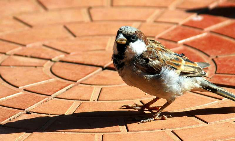 Bird immune systems reveal harshness of city life
