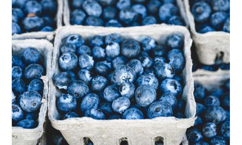 …but eating blueberries every day improves heart health
